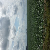 Crop-Damage-7-7-16-020.jpg