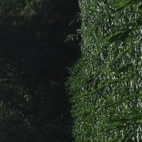 Crop-Damage-7-7-16-024.jpg