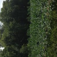 Crop-Damage-7-7-16-025.jpg