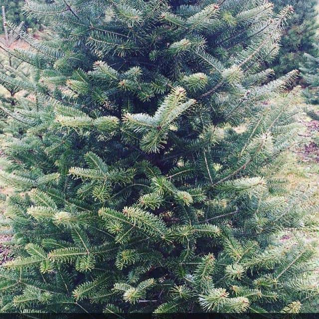 Christmas Tree Pick Up.Christmas Tree Pick Up Mason City Alpha Media Mason City