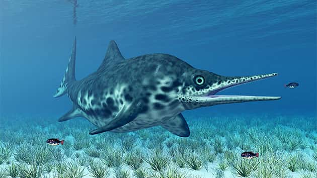 Fossil found in England belongs to giant sea creature that