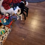 Woof Spider: Pepper the Woof Spider