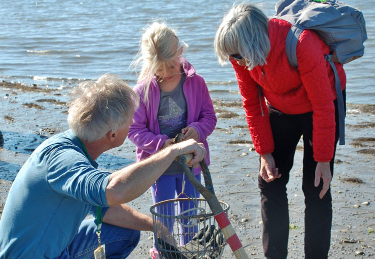 Christmas Tree Recycling Greenwich : Discover shellfishing at the seaside center