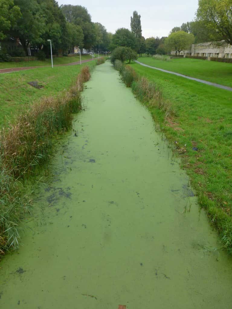 Officials issue warning of risks from blue-green algae
