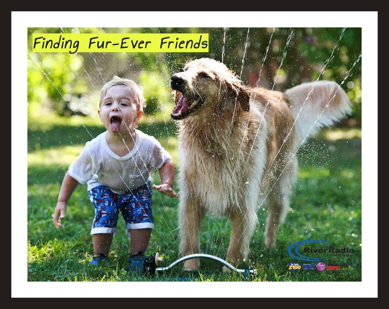 FindingFureverFriendsUpdate2019