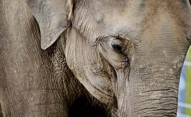 Runaway elephant returned to upstate New York sanctuary | WBZG