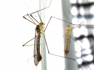 IDPH Reports Increase In West Nile Virus Activity