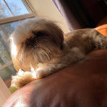 """Emily-Marshall-Wickett: Our sweet little """"ewok"""" we adopted last year. He's a sweet, snuggly, and playful coworker that keep us on our toes (and full of laughter& love!)"""