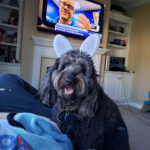Jamie-Petrenko-Arie: Arie is a 2 year old golden doodle who is loving having her family healthy at home