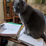 Jennifer-Ferguson-Nim: Nim loves to help me with my paperwork