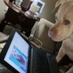 Lindsey-Sturgill-Clyde: This is a foster from Lexington Humane Society. I am a teacher so I decided to get a foster to hang out with as I work from home. This photo is Clyde looking at his updated profile on the computer.