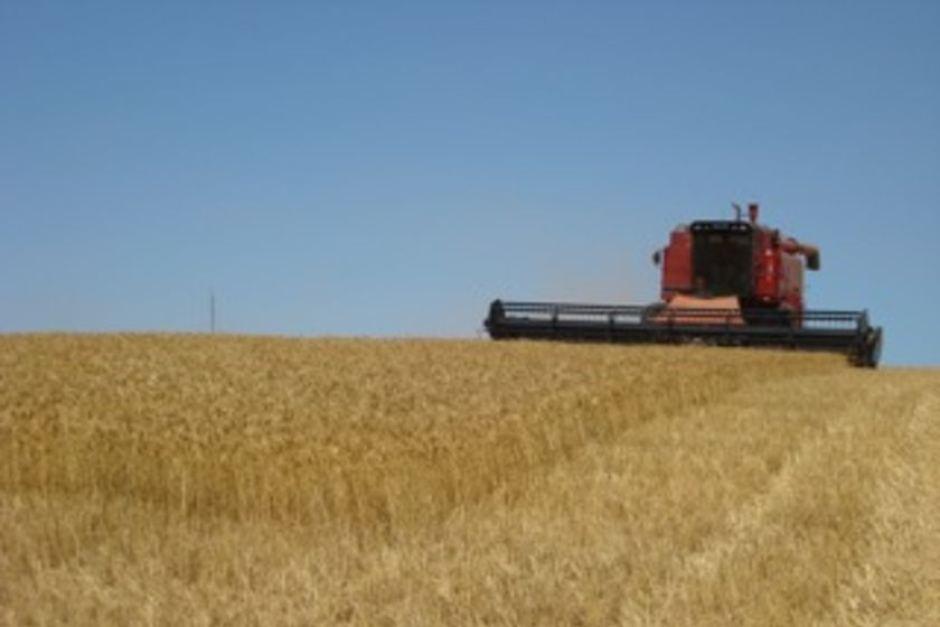 070814 Wheat Harvest