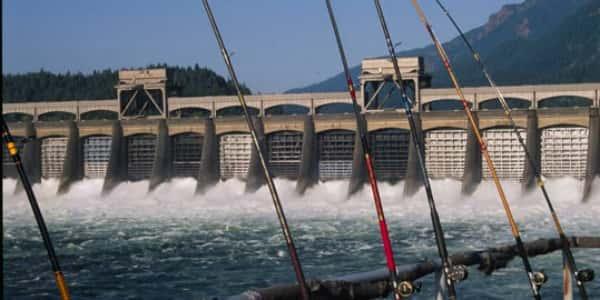 La Gas Prices >> Enough Chinook Return Over Bonneville Dam For Salmon ...