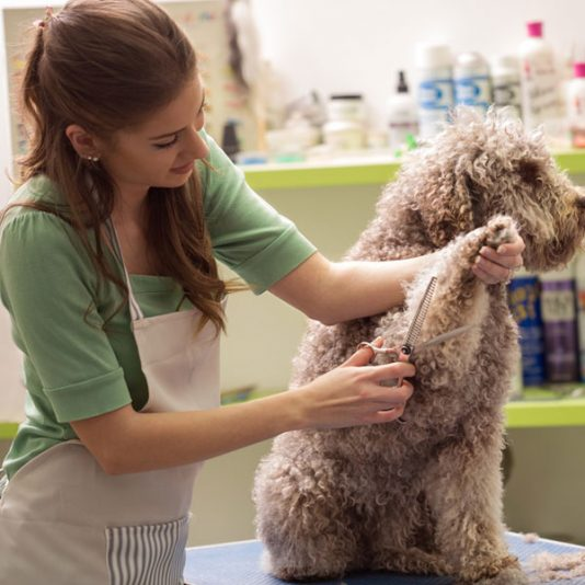 5 Grooming Sessions: Give the gift of a clean dog! Give the gift of a clean dog! Give the gift of a clean dog! Give the gift of a clean dog! Give the gift of a clean dog! Give the gift of a clean dog! Give the gift of a clean dog! Give the gift of a clean dog! Give the gift of a clean dog! Give the gift of a clean dog!
