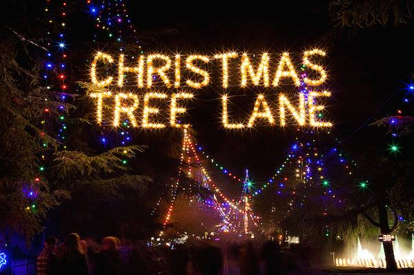 Christmas Tree Lane Fresno.Christmas Tree Lane Walk 105 1 The Blaze