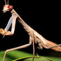 Over 100 Praying Mantises Take Over Home After Woman Buys