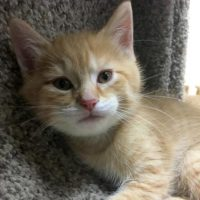 Humane Society Of Southern Wisconsin Holds Kitten Adoption Special Wclo
