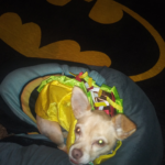 Tired taco/ long walk: Gizmo