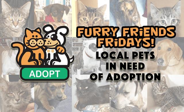 Furry Friends Fridays | 98 3 The Coast