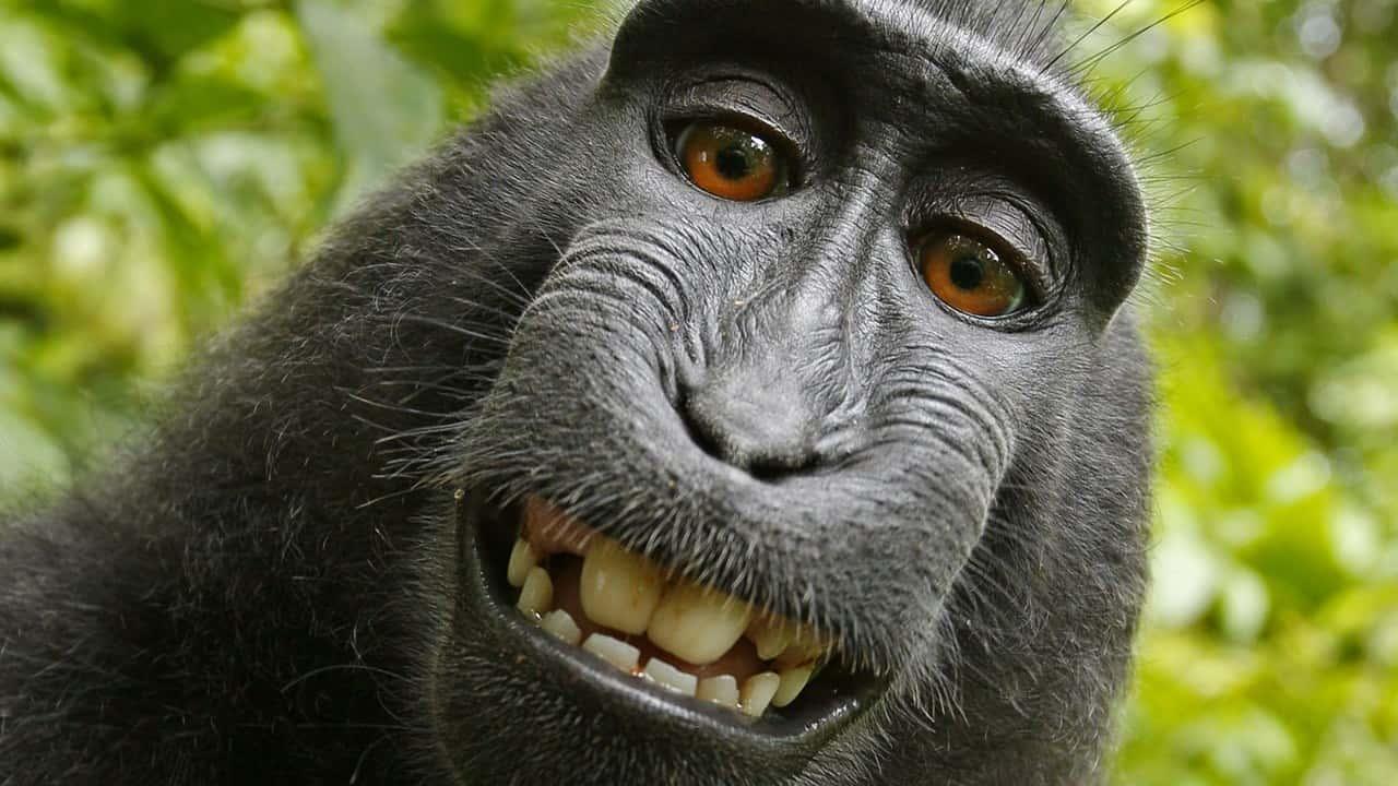 Monkey sex video
