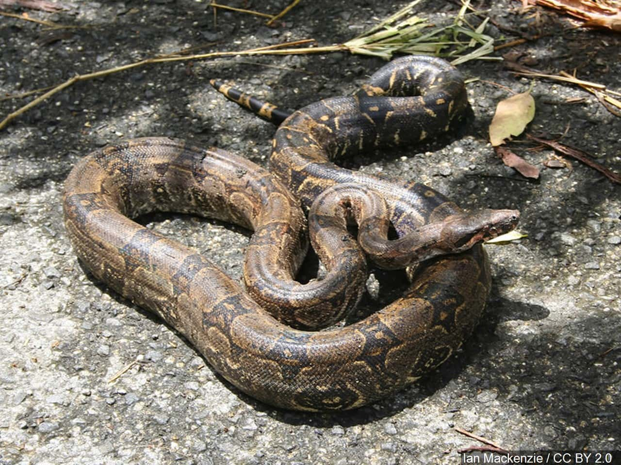 89-year-old Florida woman battles and kills 6-foot snake after it