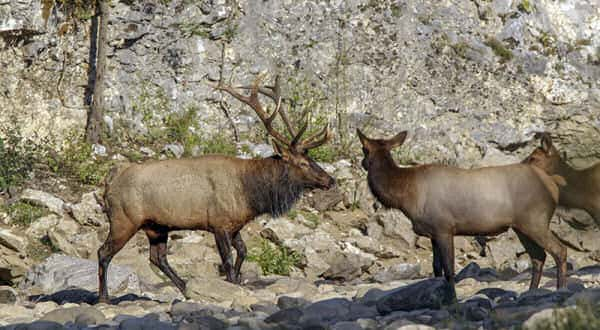Applications For Public Land Elk Hunting Now Available