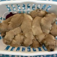 basket-o-puppies.jpg