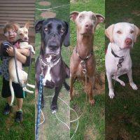 heathers-dogs.jpg
