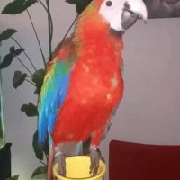 larry-the-macaw.jpg