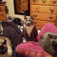 CATS-PET-PICS-e1551902099256.jpg