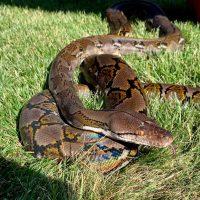 pet-pic-snake-e1565801363725.jpg