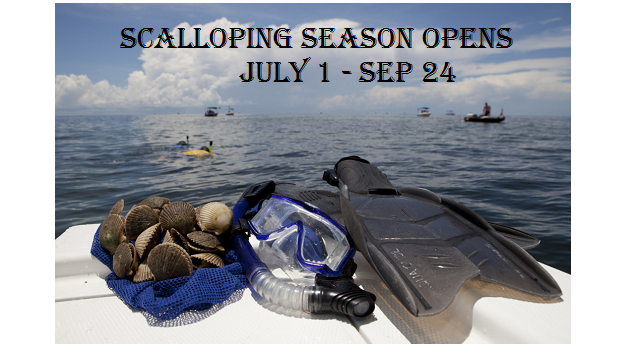 Scalloping Season Opens JULY 1st