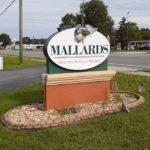 Mallards-3