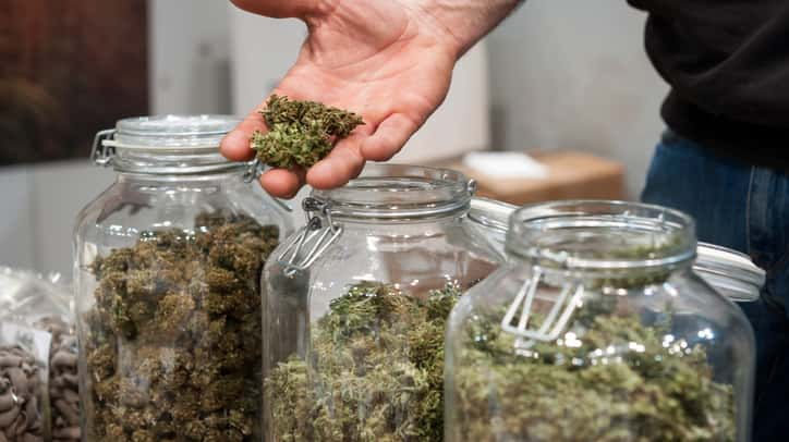 As states move to legalize pot, schools offer a master's degree in marijuana