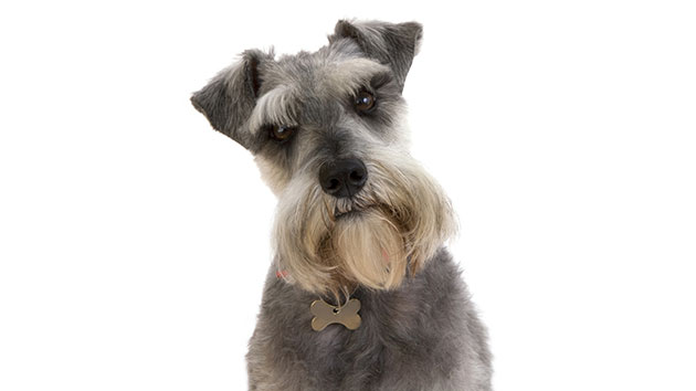Hilarious Talking Dog Shares Advice For Humans Amid Coronavirus