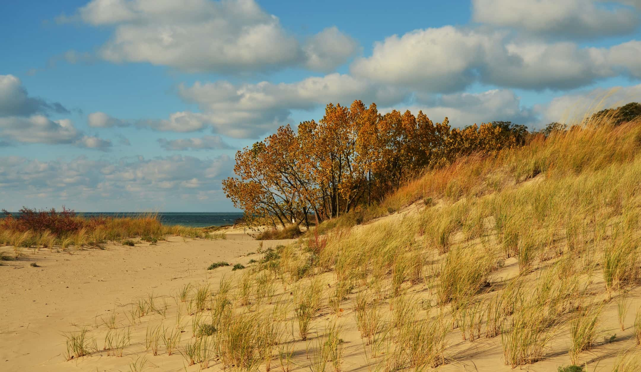 Spring Comes To Dunes >> Warren Dunes State Park Enhancement Projects Will Restrict Early