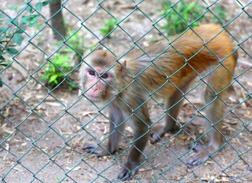 UL Monkey captured