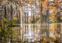 Lafayette lake trees