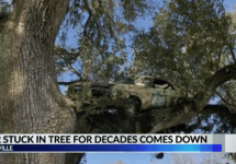 car stuck in tree abbeville
