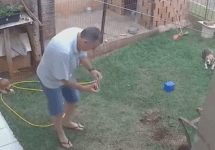 Guy blows up lawn setting fire to cockroach nest