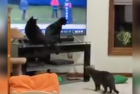 black cats watch other black cat on monday night football