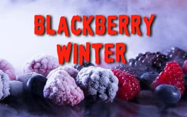 Blackberry-Winter.jpg