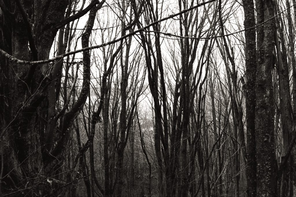 Thick leafless trees obscure a grey sky