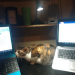 Priya The Top Cat Hard At Work
