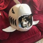 Playful: Puppy Staycation