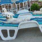 A Dog: Susan's Trio