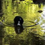 Water Gil: Brenda's Baby
