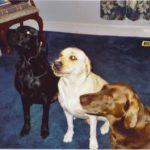 Doobie, Reese, & Hershey: Steve's Three