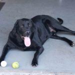 Tucker: AJ's Best Friend Too!