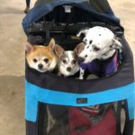 The Pet Expo